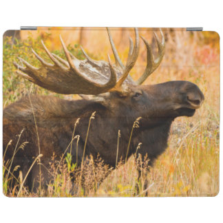 Moose (Alces Alces) Bull In Golden Willows iPad Cover