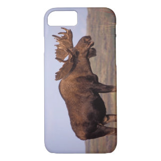 moose, Alces alces, bull with large antlers in iPhone 7 Case