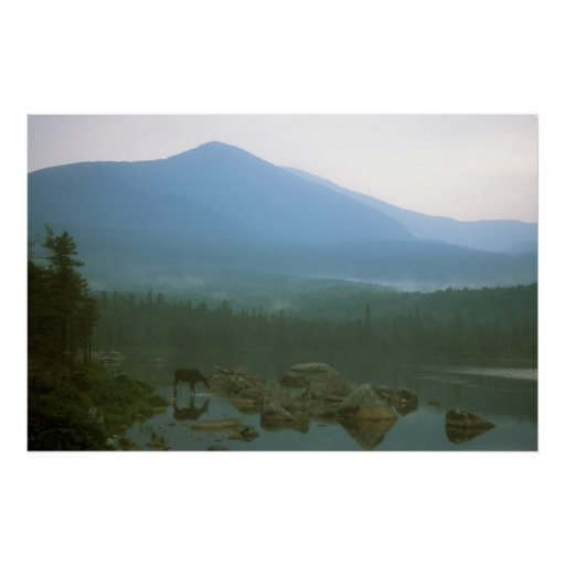 Moose and Mount Katahdin Posters