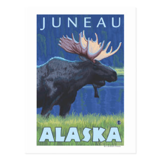 Moose at Night - Juneau, Alaska Postcard