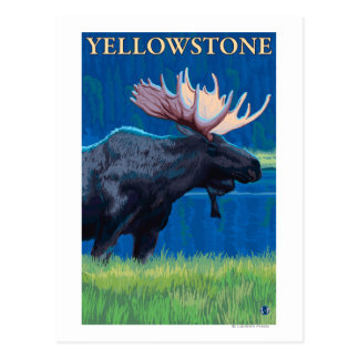 Moose at Night - Yellowstone National Park Postcard