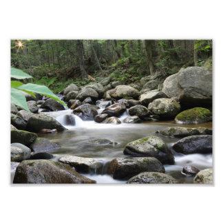 Moose Brook Photo Print