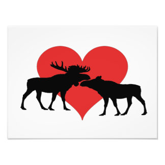 moose bull and cow photo print