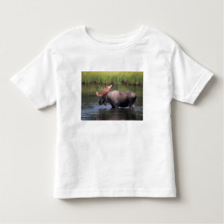 moose, bull in a kettle pond and feeds on toddler t-shirt
