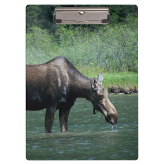 Moose Clipboard