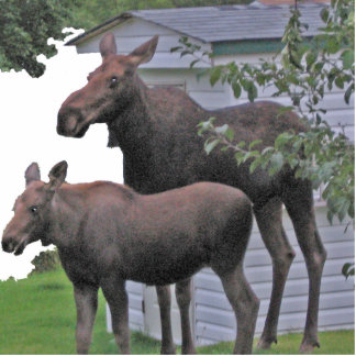 Moose cow with calf Photo Sculpture
