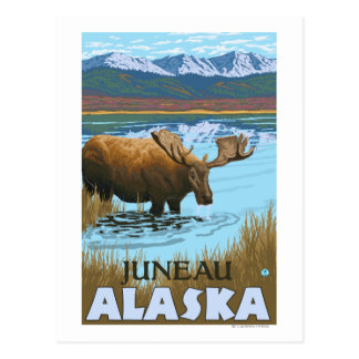 Moose Drinking at Lake - Juneau, Alaska Postcard