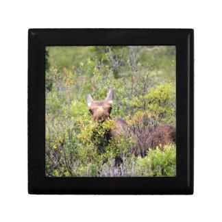 moose gift box