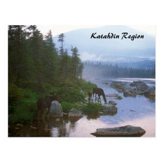 Moose in Evening Storm Katahdin Region Postcard