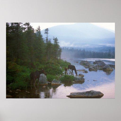Moose in Evening Storm Print