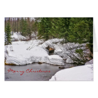 Moose in Snow Greeting Card