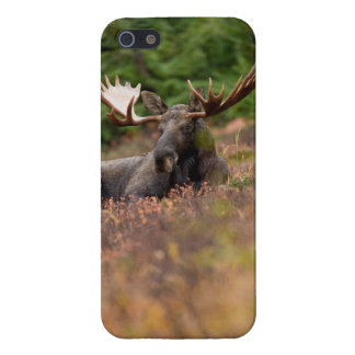 Moose - iPhone 5 Cover