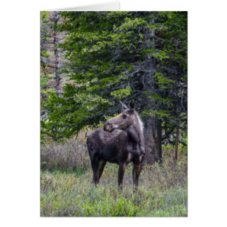 Moose Mother Card