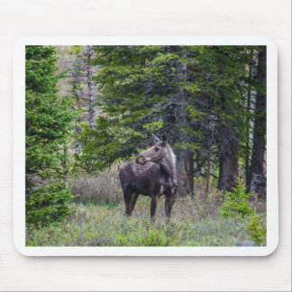 Moose Mother Mouse Pad