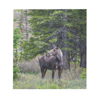 Moose Mother Notepad