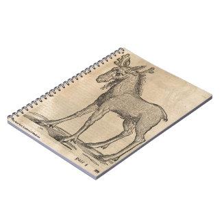 Moose Notebooks