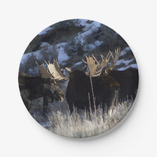 Moose pack 7 inch paper plate