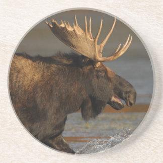 moose splash coaster