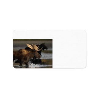 moose splashing in the water