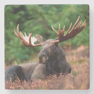 Moose Stone Coaster