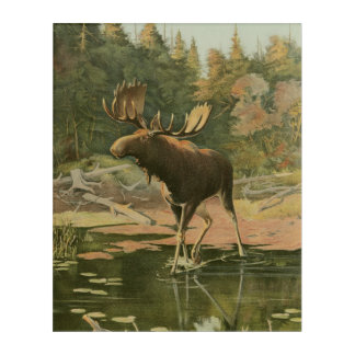 Moose Walking in Water Acrylic Wall Art