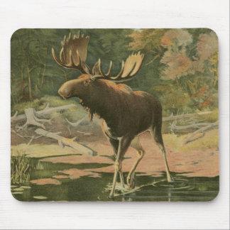 Moose Walking in Water Mouse Pad