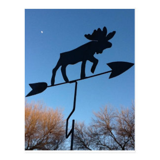Moose weathervane postcard