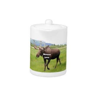 Moose you: Alaskan moose