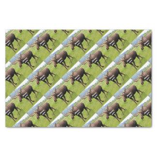 Moose you: Alaskan moose Tissue Paper