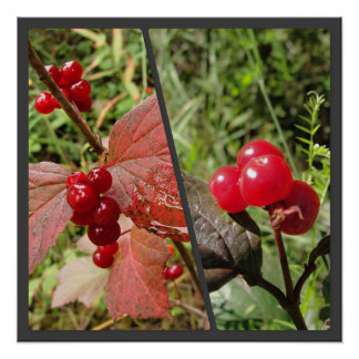Mooseberry Two Panel Collage Poster