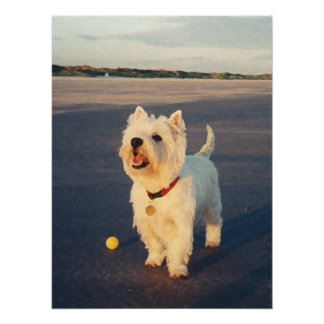 More Please!  Westie Ball Poster