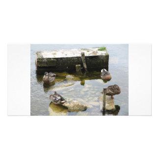 More Sleeping Ducks Custom Photo Card