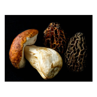 Morels and King Bolete Postcard