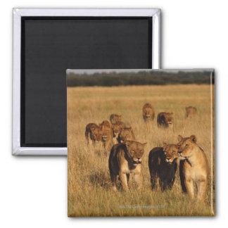 Moremi Wildlife Reserve, Botswana Magnet