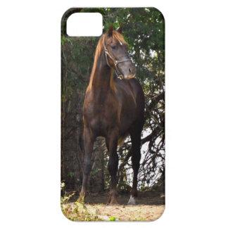 Morgan Horse iPhone 5 Cover