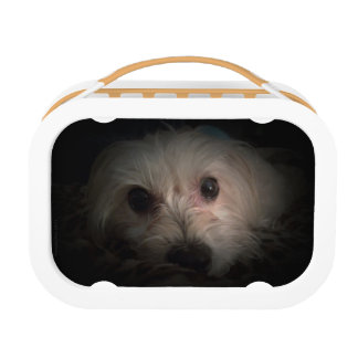 Morkie Dog Puppy Cute Adorable Rescue Lunchbox