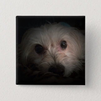 Morkie Dog Puppy Cute Rescue Button