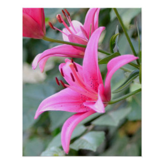 Mornig Flowers - Pink Lillies Poster