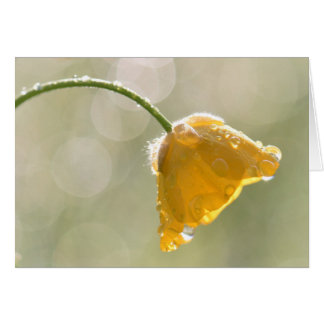 Morning Buttercup Happy Birthday Greeting Card