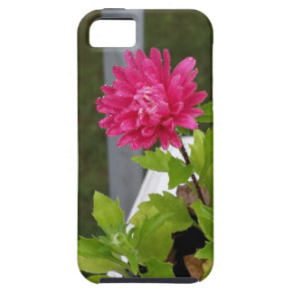 Morning Dew iPhone 5 Cover
