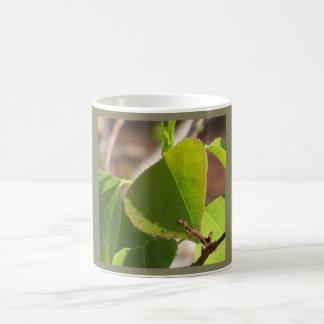 morning Dew on Chinese tallow leaf Coffee Mug