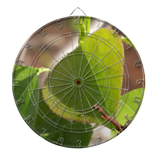 morning Dew on Chinese tallow leaf Dartboard