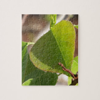 morning Dew on Chinese tallow leaf Jigsaw Puzzle