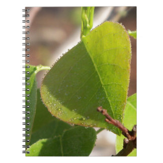 morning Dew on Chinese tallow leaf Notebook