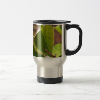 morning Dew on Chinese tallow leaf Travel Mug