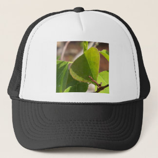 morning Dew on Chinese tallow leaf Trucker Hat