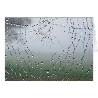 Morning Dew Spider Web Card