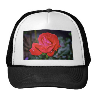 Morning Dew Trucker Hat