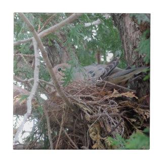 Morning Dove Nesting Tile
