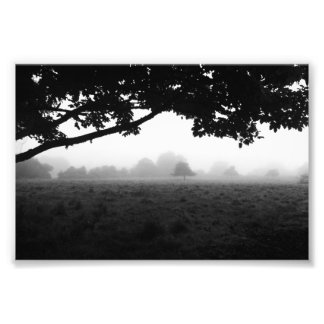 Morning Fog Emerging From Trees Photo Print